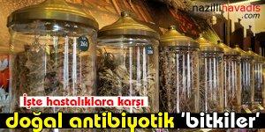 İşte hastalıklara karşı doğal antibiyotik 'bitkiler'