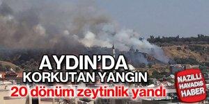 Aydın'da 20 dönüm zeytinlik yandı
