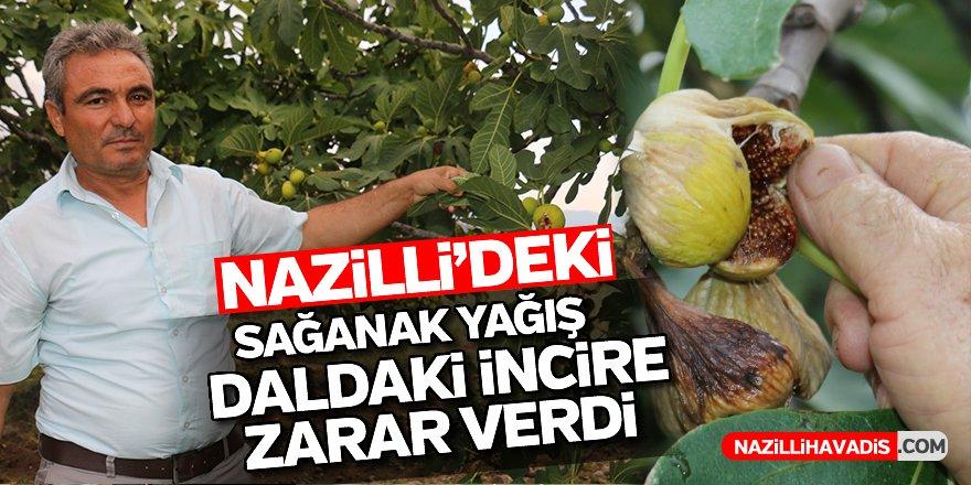 Nazilli'deki sağanak yağış daldaki incire zarar verdi