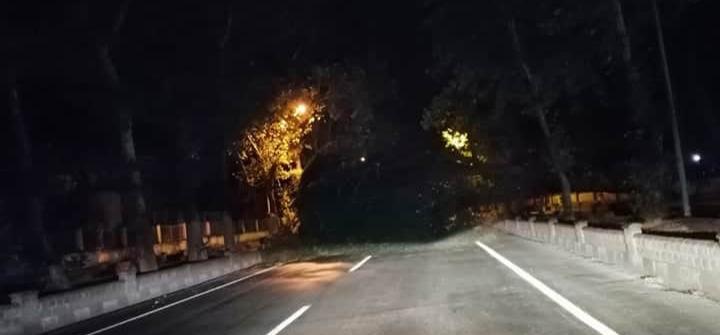 Nazilli'de devrilen çam ağacı karayolunu kapattı