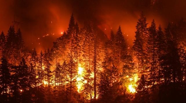 Türkiye'nin orman yangını bilançosu belli oldu! En büyük zarar Ege'de!
