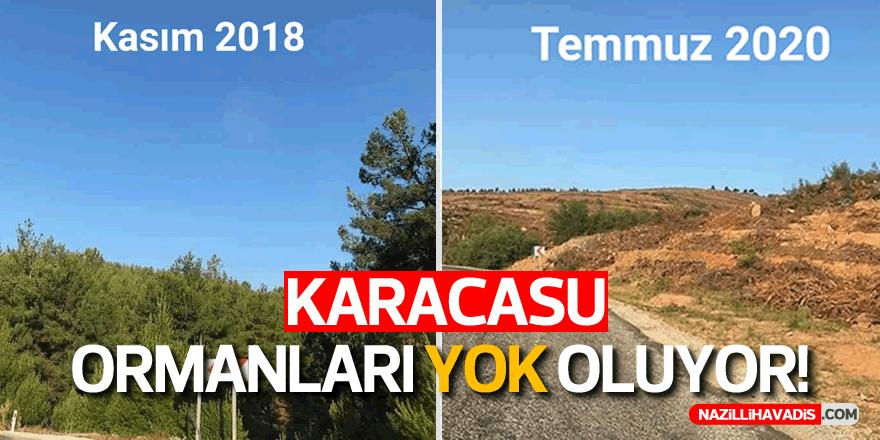 """Çevreciler; """"Karacasu Ormanları Yok Edilmesin!"""""""