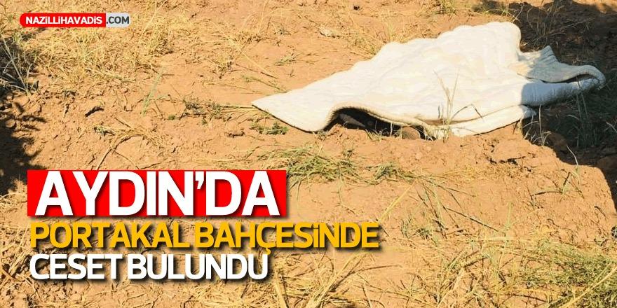 Aydın'da portakal bahçesinde ceset bulundu