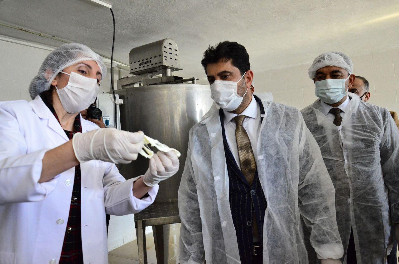 Aydın'da üniversitede kaşar peyniri üretim tesisi kuruldu