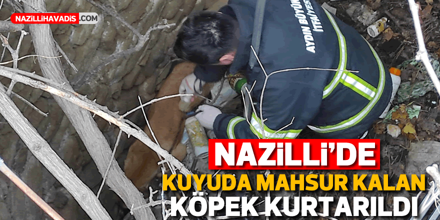 Nazilli'de 7 gün boyunca kuyuda mahsur kalan köpeği itfaiye kurtardı