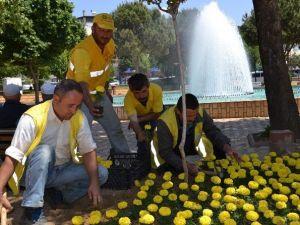 Büyükşehir, Nazilli'deki Parkları Çiçeklendiriyor