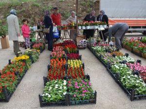 Vatandaşlar Bahçelerinde En Çok Horoz İbiği Çiçeğini Tercih Ediyor