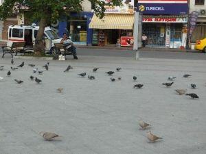 Burhaniye'de Güvercinler İmece İle Besleniyor