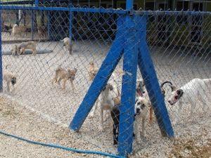 Gelibolu Belediyesi'nden Hayvan Barınağına Yeni Klinik