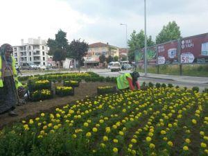 Düzce Kavşaklarına Rengarenk Çiçekler Dikiliyor