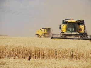 Suriye'de Buğday İstiflenmeye Başlandı