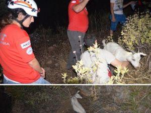 Muğla'da Kayalıkta Mahsur Kalan Keçiyi AKUT Kurtardı