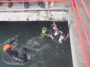 Kocaeli'de Denize Düzeşen Köperk İtfaiye Tarafından Kurtarıldı