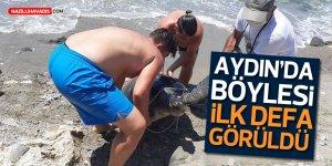 Dev Kaplumbağa Kıyıya Vurdu