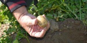 Patateste Ödemiş'e rakibiz